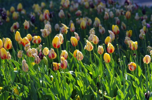 spent blooms