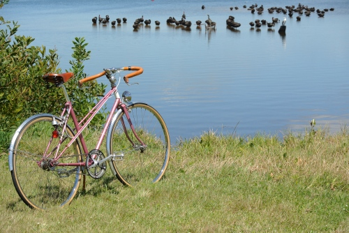 "pink ""turbo"" mixte"