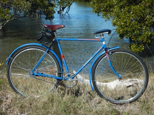 tweedy cruiser with mangroves